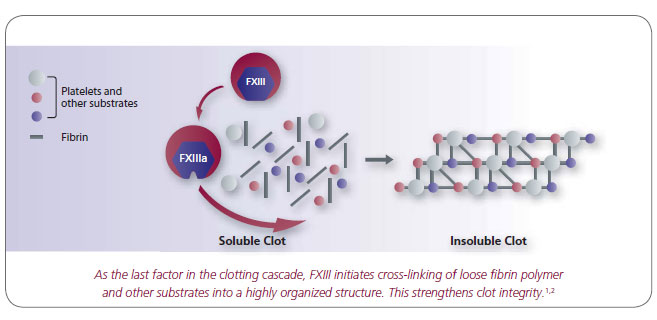 The role of FXIII in coagulation